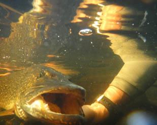Underneath water Jason Evans