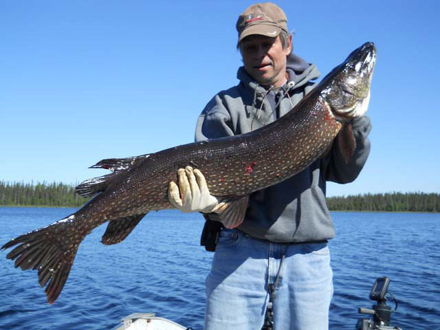 Pike trophy from Brian Marcinkoski on Hanotaux Lake