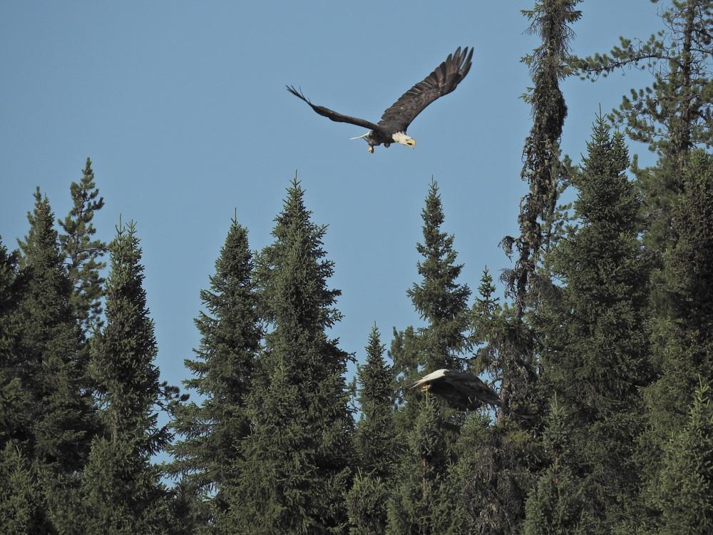 Meeting in the wild by John Romano
