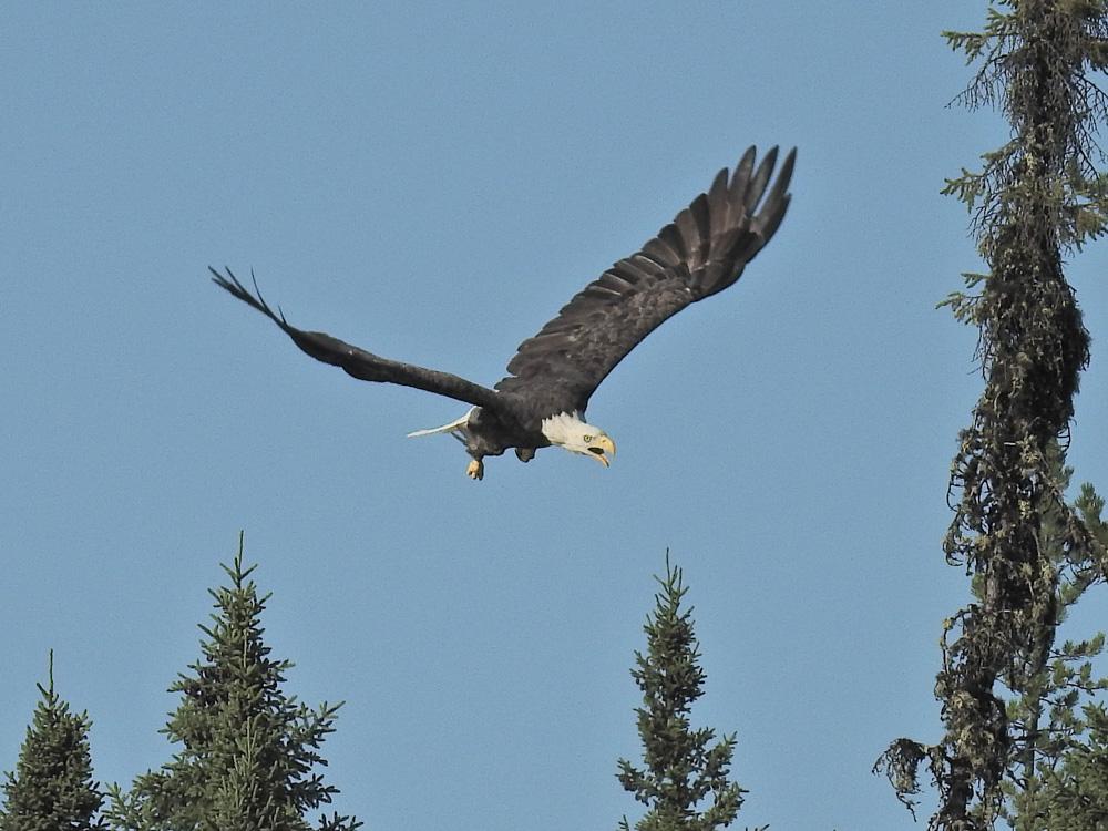 Picture contest winner Flight patrol by John Romano