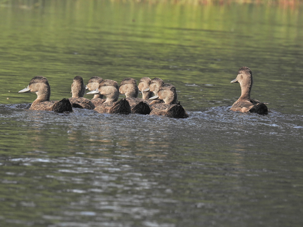 Swimming with the family by John Romano